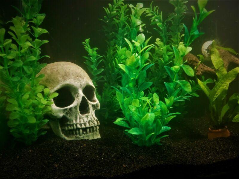 10 Pound Black Fine Sand Substrate for Aquarium Terrarium Garden >2k lbs. sold