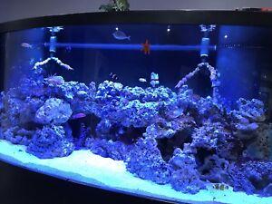 Live rock for saltwater aquarium