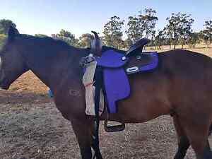 Purple western saddle Clare Clare Area Preview
