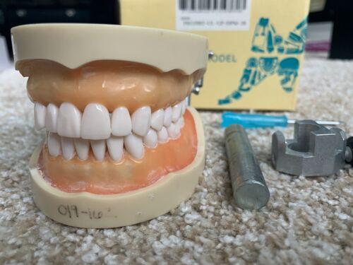 Dental Anatomy or Operative Dentistry Dentoform
