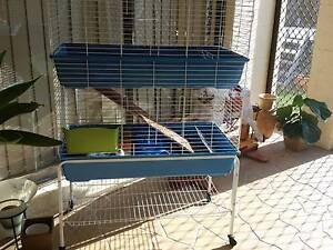 Double story Guinea pig hutch Mango Hill Pine Rivers Area Preview