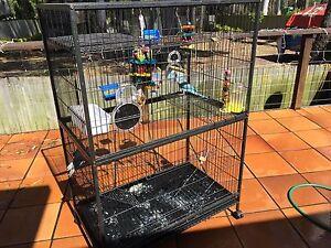 2 ring neck parrots Redland Bay Redland Area Preview