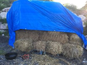 Bales of Straw $5 each