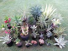 Plants-Full Sun Dry Garden Landscaping Garbutt Townsville City Preview