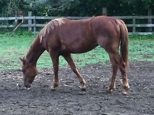 Rising two year old Appaloosa filly