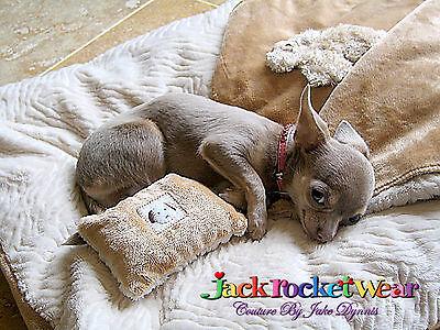NEW CremeChocolate LUXURY DOG PET Jackrocketwear PET BLANKET L Carrier BED CRATE