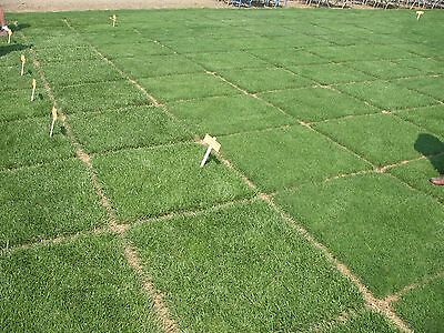 Heirloom 10000 Seeds Tall Fescue Grass Seed ...