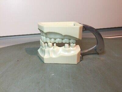 Vintage Columbia Dentaform Half Jaw Teeth Model