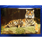Wild Tiger with Baby Loving Paws Kids Picture Art Poster Wall Print Decor 24X36