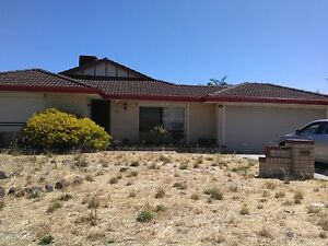 Big 4x2 house Alexander Heights Wanneroo Area Preview