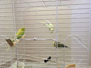 Three bunches and a cage