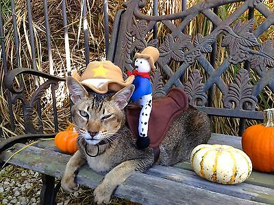 Funny Small Dog Halloween Costumes (CUTE FUNNY SHERIFF RIDER PET CAT/DOG HALLOWEEN COSTUME SMALL)