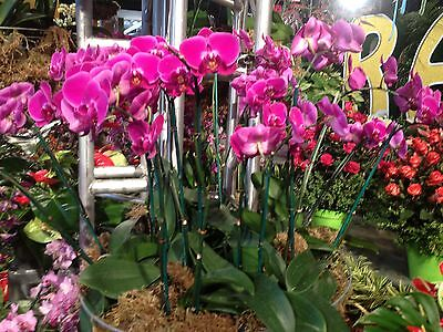 Moth Orchid's Antiques and Pottery