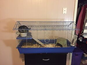 Rehoming our chinchilla Olive