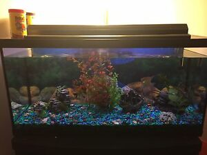 33 gallon tank with angel fish