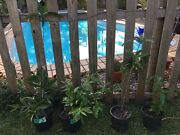 Potted plants Trinity Beach Cairns City Preview