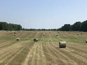 Timothy/Alfalfa Dry Hay (No Rain)