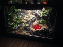 Custom Reptile display enclosure Highland Park Gold Coast City Preview