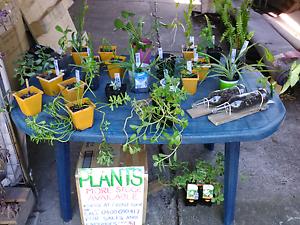 !!! PLANT SALE !!! Penrith Penrith Area Preview