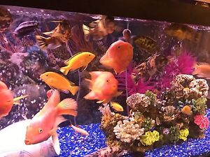 150 gallon aquarium  London Ontario image 7