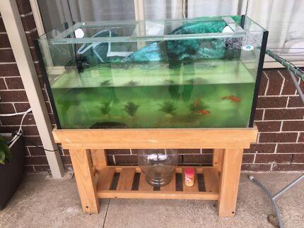 4feet tank fish/ turtle/ reptile