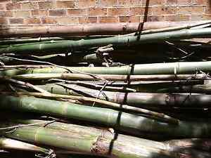 Free bamboo Chatswood West Willoughby Area Preview