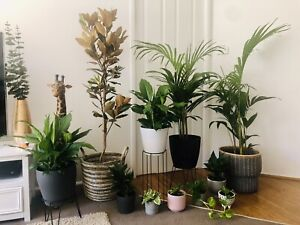 INDOOR PLANT SALE POT INCLUDED Dunlop Belconnen Area Preview