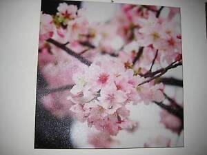 Canvas Paint - Cherry Blossom Holt Belconnen Area Preview