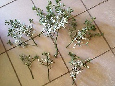 Fresh Cut Real Live Mistletoe With Berries 2-4 Good Size Sprigs