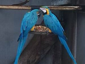 MEGA BIRD SALE. Windsor Gardens Port Adelaide Area Preview