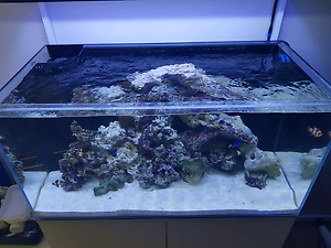 Full marine aquarium setup. 1 month old Craigmore Playford Area Preview