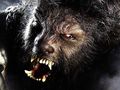 HALLOWEEN UNIVERSAL MONSTERS WOLFMAN HORROR  DECORATION FRIDGE MAGNET #4 (Wolfman Halloween Decorations)