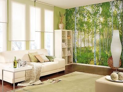 Wall Mural Photo Wallpaper SUNDAY BIRCH FOREST TREES Living Room Decor 368x254cm