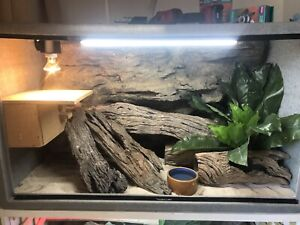 URS Reptile Enclosure w/Rock Background Essendon Moonee Valley Preview