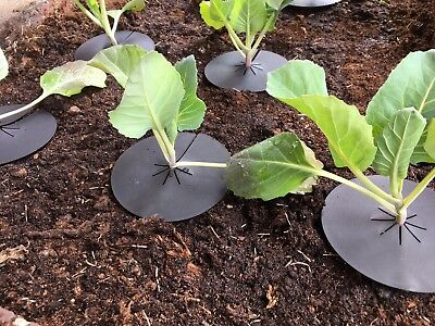 60 Reusable Brassica Cabbage Plant Protector Collar Mats Deters Root Flies X8140 for sale  Shipping to Canada