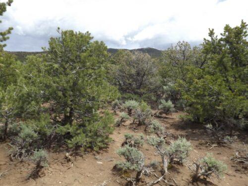 """Colorado """"Off-the-Grid"""" 5 Ac Treed Land; Sangre de Cristo Ranches"""