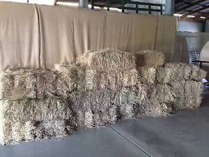 Rye Grass Hay Bales for Sale Yandina Maroochydore Area Preview