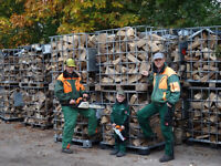 Trockenes Kaminholz Brennholz ab 4 SRM halbe Lieferkosten Nordrhein-Westfalen - Ochtrup Vorschau