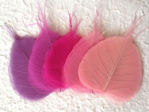 25 pink fuchsia plum variety leaves leaf Po Bo Banyan Skeleton cards crafts Med