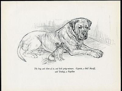 MASTIFF AND PAPILLON CHARMING VINTAGE 1930'S DOG ART PRINT by KF BARKER