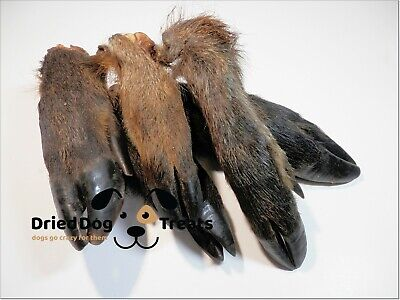 [10pcs] Dried Furry WILD BOAR Legs Hooves Grade A-100% NATURAL hypoallergenic