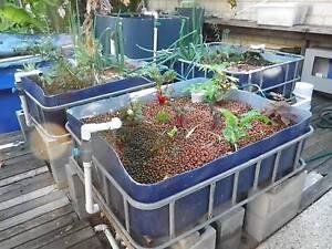 Aquaponics System Rockingham Rockingham Area Preview