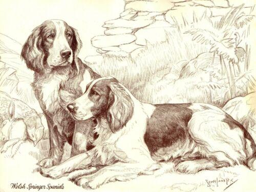 1930s Antique Welsh SPRINGER SPANIEL Dog Print Nina Scott Langley Art 4008t