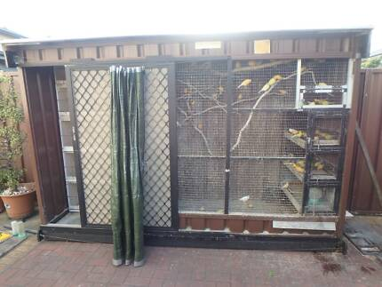Aviary with 50+ canaries Banksia Rockdale Area Preview