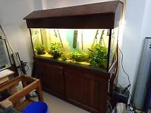 5ft Fish Tank Bonner Gungahlin Area Preview