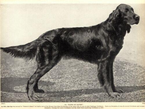 1930s Antique GORDON SETTER Dog Print Champion Dawn of Daven 3815-D