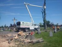 A1 Tree and Stump Removal