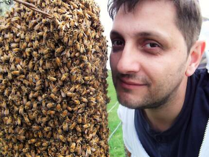 Honey Bee Swarms Patrol - removal (relocation) all Adelaide Areas