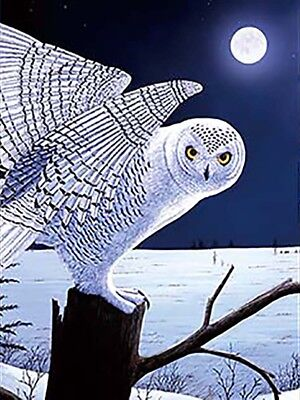 3D Lenticular Poster - 3 White Owls -12x16 Print Animated - 3 prints in 1
