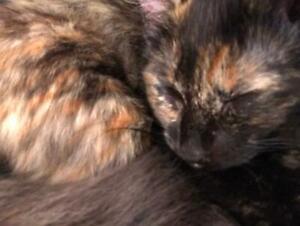Free 12 week old kittens